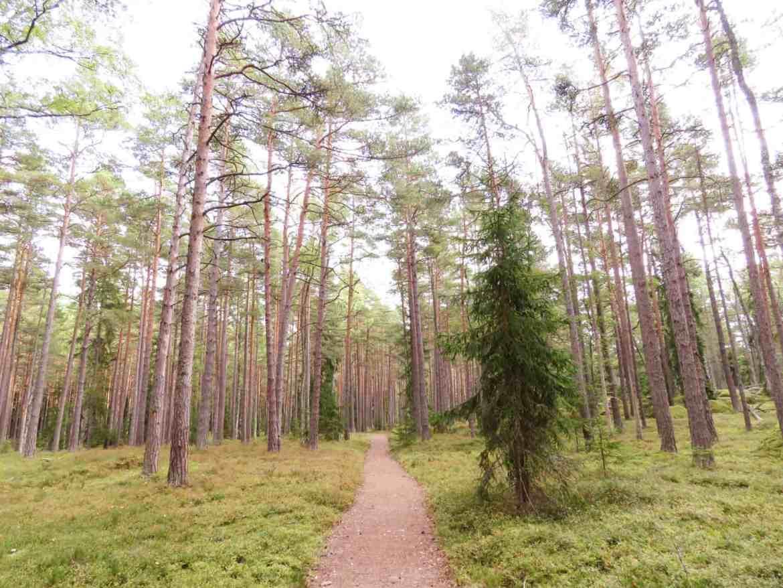 gogirlrun_estland_outdoor_wandern_lahemma-nationalpark_16