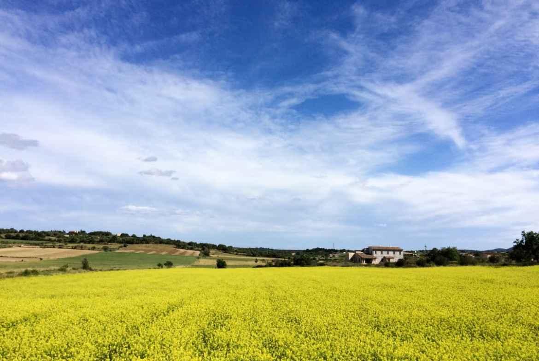 Rapsfelder Mallorca