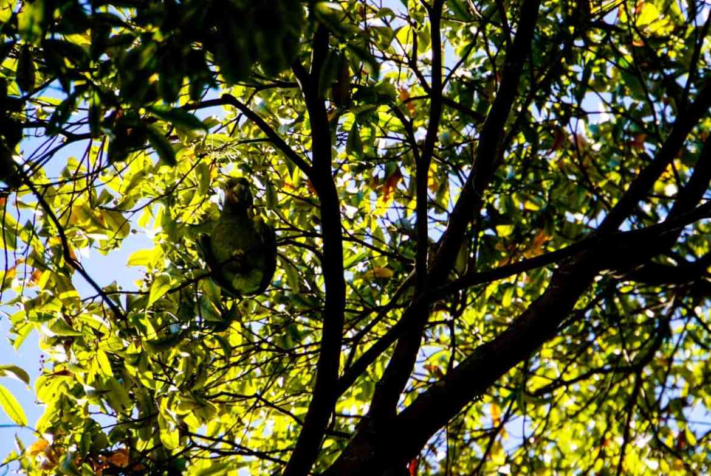 Papagei im Jardin Botanico in Medellín