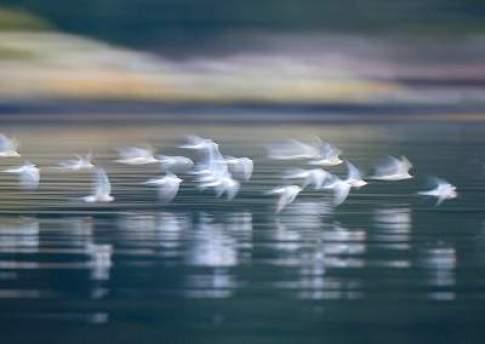 DieciDomande-uccelli_natura