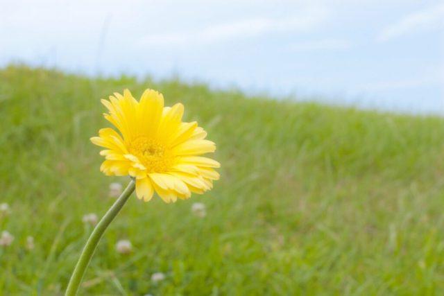 ガーベラに似た花の名前は何?!季節や花の特徴で似た花の名前が判明?!