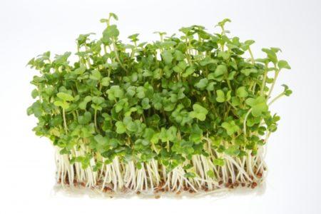 ブロッコリースーパースプラウトの栄養価は高い?期待できる効果効能とは?