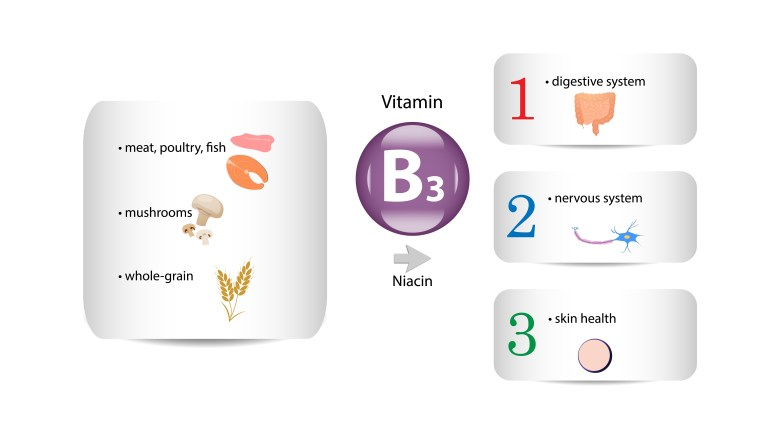 Vitamin B3 - sources and actions