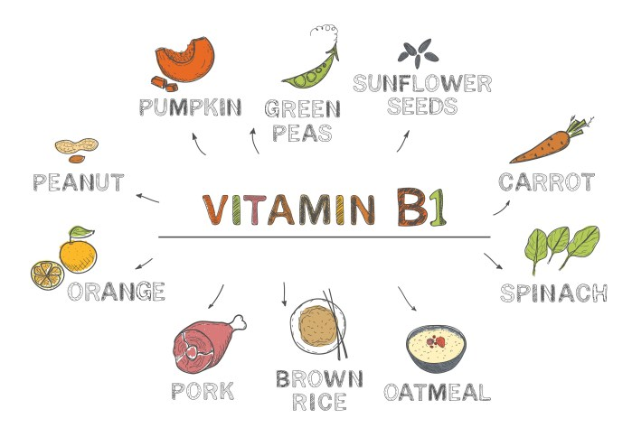 Most important dietary sources of Thiamine (vitamin B1)