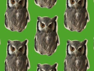 ペット画像を元にパターンメーカーで作成した壁紙1