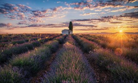 VALENSOLE – @pels_photo