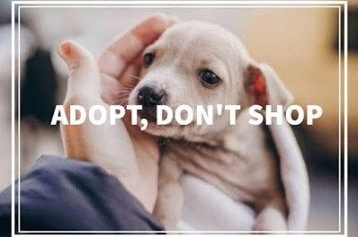 Let's adopt them