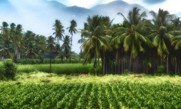 TAMIL NADU – @life2everything