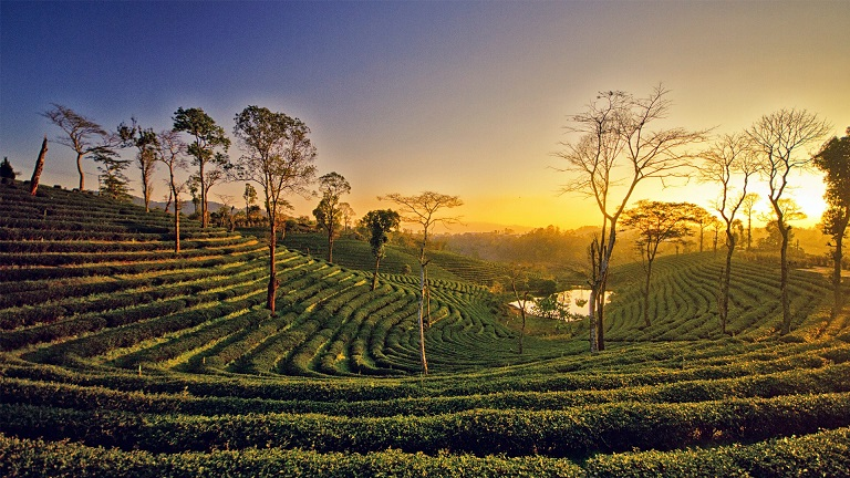 Assam the unnoticed beauty of India