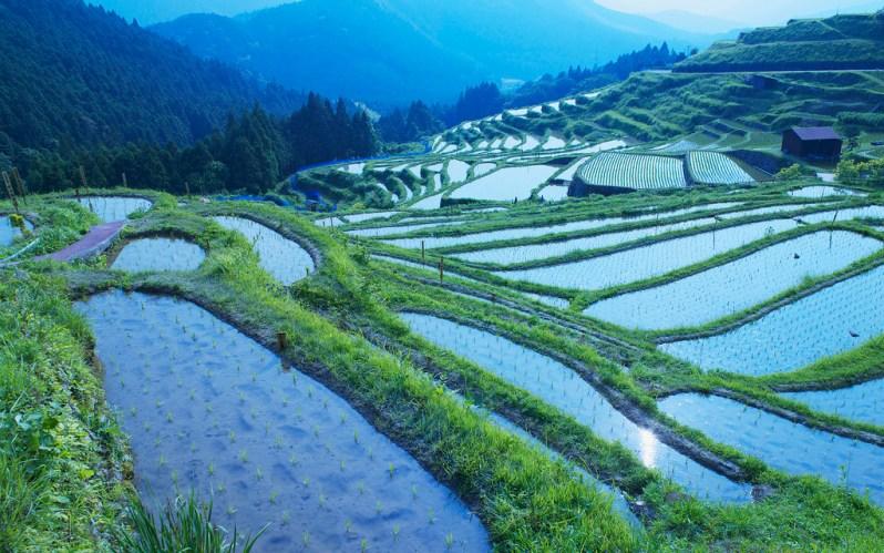 Ein Terrassen-Reisfeld in Japan