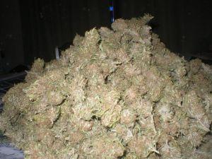 Pile of Pot