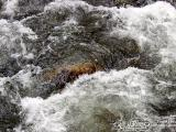 Smoky Mountains Pigeon River Tennessee White Water Close-up
