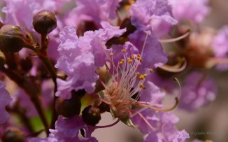 Some lovely flowers on a tree. Macro.