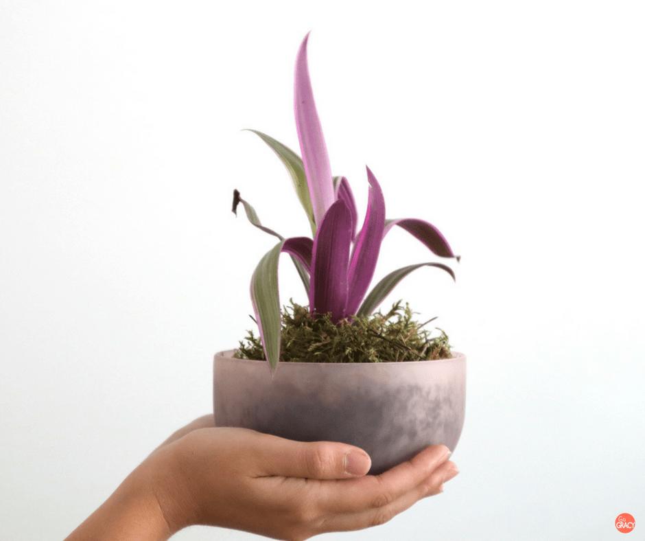10x roze planten voor in huis