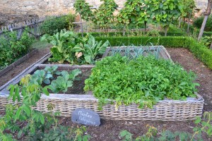 how to build a vegetable garden from scratch