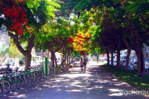 Tel-Aviv-Tel-Aviv-Tel-Aviv-Jaffa-Jerusalem-Israel______3116