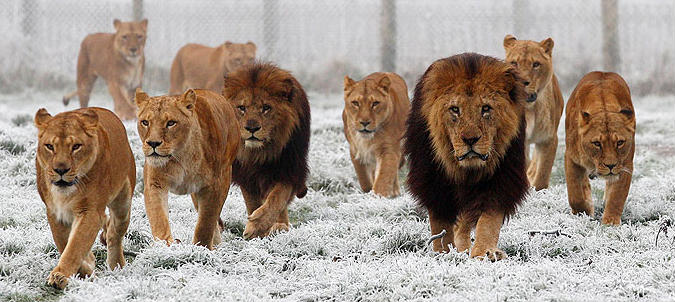 Kings Arise & Unite