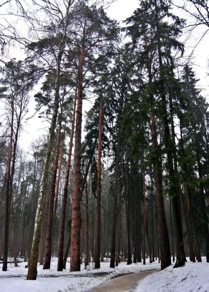 Archangelskoye - pine forest