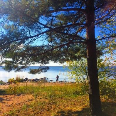 Baltic Sea coast 3
