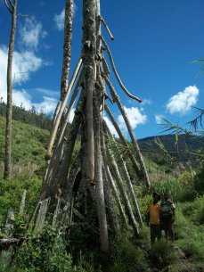 Moroan Tarcy Paul and Raphael Aita at the base/roots of a over grown pandanus tree