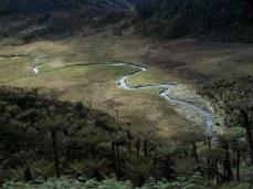 Prestine Vegetation at the Boarder of Kosipe and Sopu - Goilala (103)