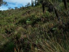 Prestine Vegetation at the Boarder of Kosipe and Sopu - Goilala (104)