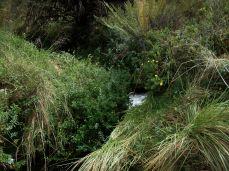 Prestine Vegetation at the Boarder of Kosipe and Sopu - Goilala (110)