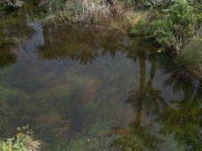 Prestine Vegetation at the Boarder of Kosipe and Sopu - Goilala (115)