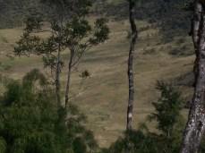 Prestine Vegetation at the Boarder of Kosipe and Sopu - Goilala (122)