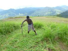 Physical Labor - Cutting Grass on the Airstrip