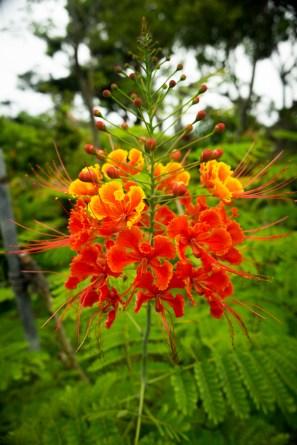 Southeast BotanicalG-2