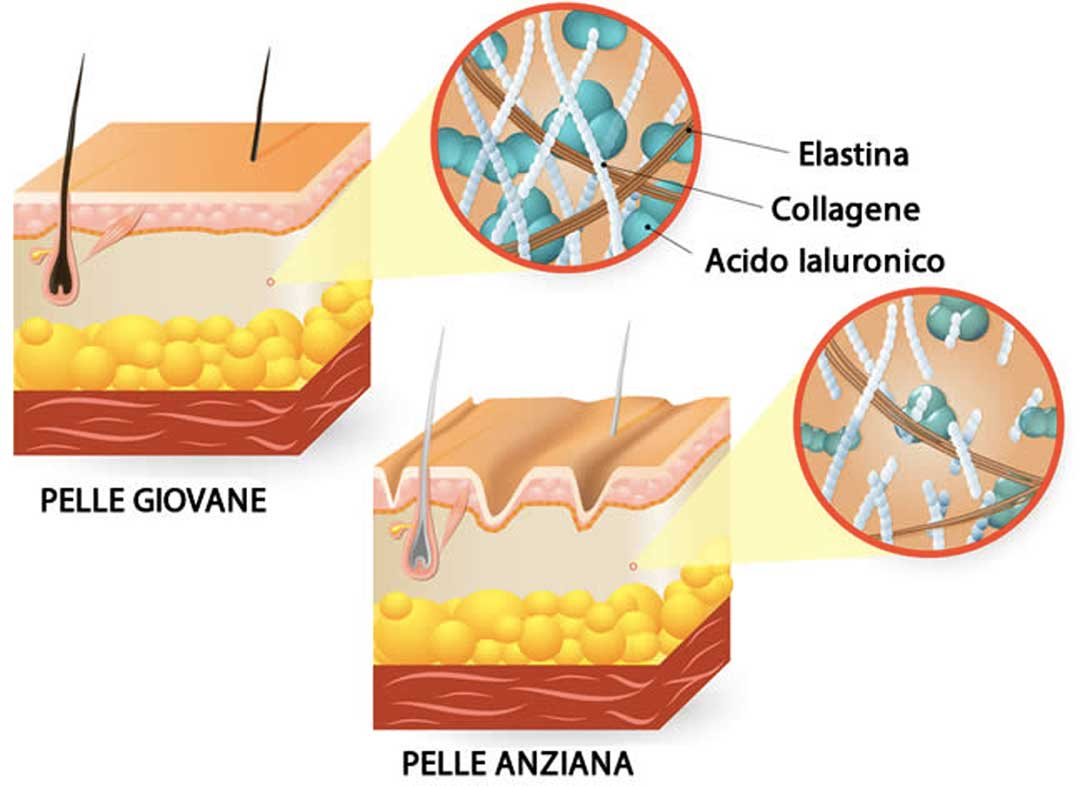 acido ialuronico puro strati pelle