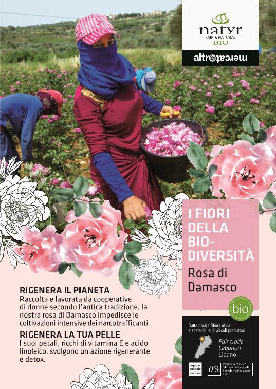fiori della biodiversità rosa di damasco