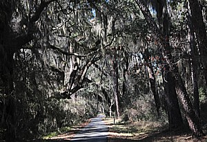 Sapelo Island © 2015 Karen Rubin/news-photos-features.com