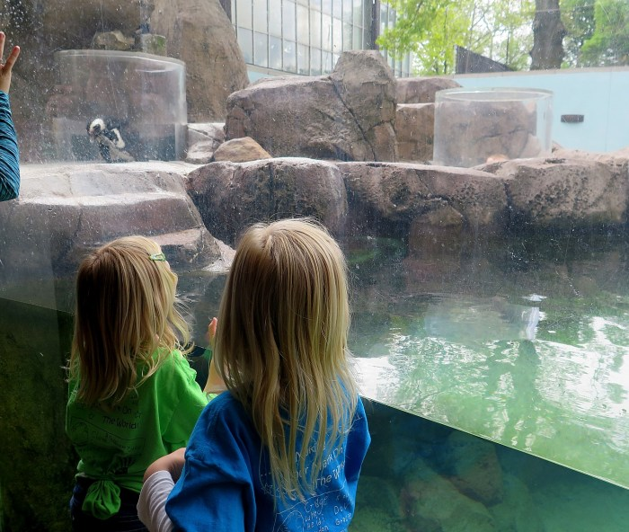 Children delight at the exhibits at the National Aviary in Pittsburgh © 2016 Karen Rubin/goingplacesfarandnear.com