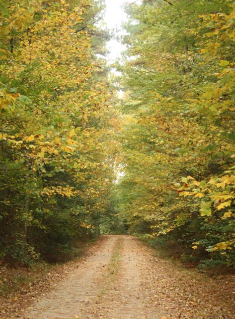 Yellows from maples, poplars, and hickories greet you on the lane.