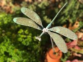 Dragonfly over herb bed