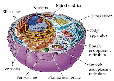 Matriks sitoplasma