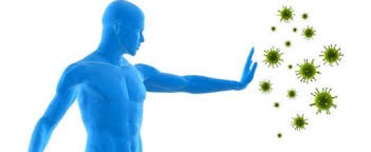fungsi antibodi tubuh