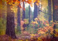 Cara Melestarikan Hutan Hujan Tropis
