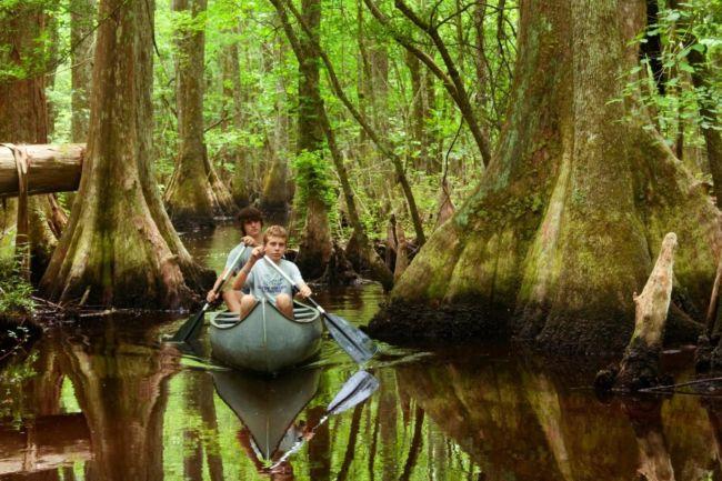 ekosistem hutan hujan tropis biotik dan abiotik