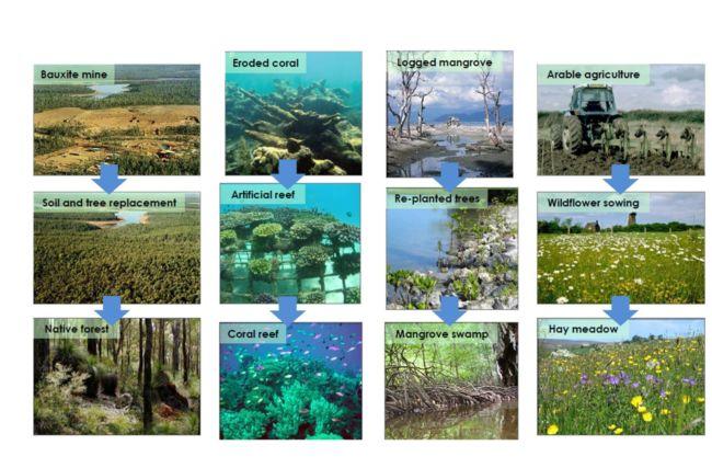 contoh keanekaragaman Hayati Tingkat Ekosistem