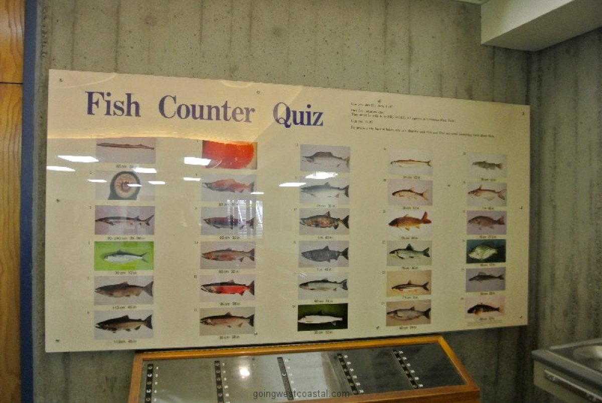 test-to-see-if-you-could-hack-being-a-fish-counter