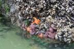 starfish and friends