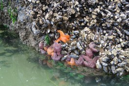 starfish and friends