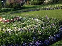 Hyde Park - Amazing Flowers