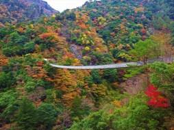 Umenoki-Todoro suspension bridge