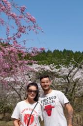 Full bloom of Sakura in Aso