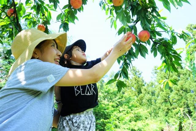 山梨の桃狩りオススメ農園