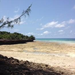 Chumbe Island (7)